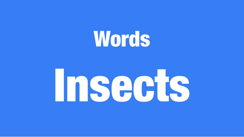 Words-Insects難易度☆